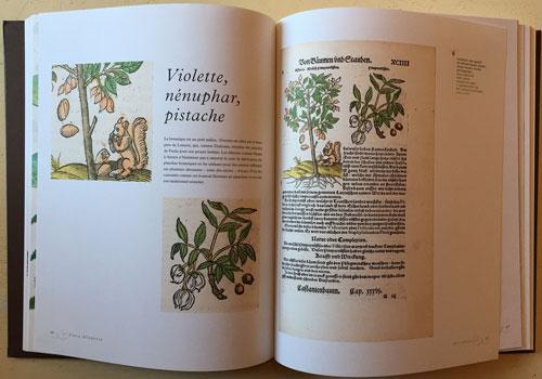 Violette Pistache Flora Allegoria Mioulane NewsJardinTV IMG 4129