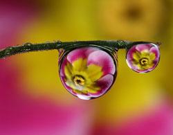 Goutte eau Miroir Fleur