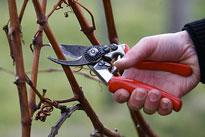 Taille Vigne Secateur Flora