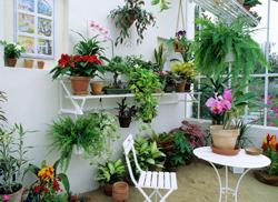Veranda Plantes Mioulane NewsJardinTV Jardimiou NPM GIP0075205