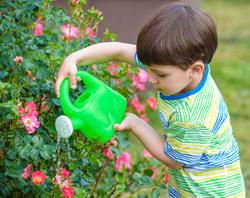 Enfant arrosage Rosier Flora