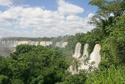Nature Iguacu Bresil Mioulane NewsJardinTV Jardimiou NPM 84937298
