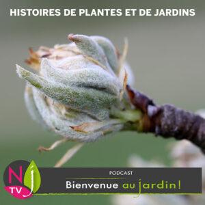 Histoire des plantes - podcast émission n°1