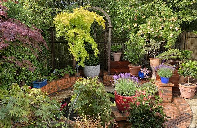 Jardin MiouMiou's juin, potées, bassin