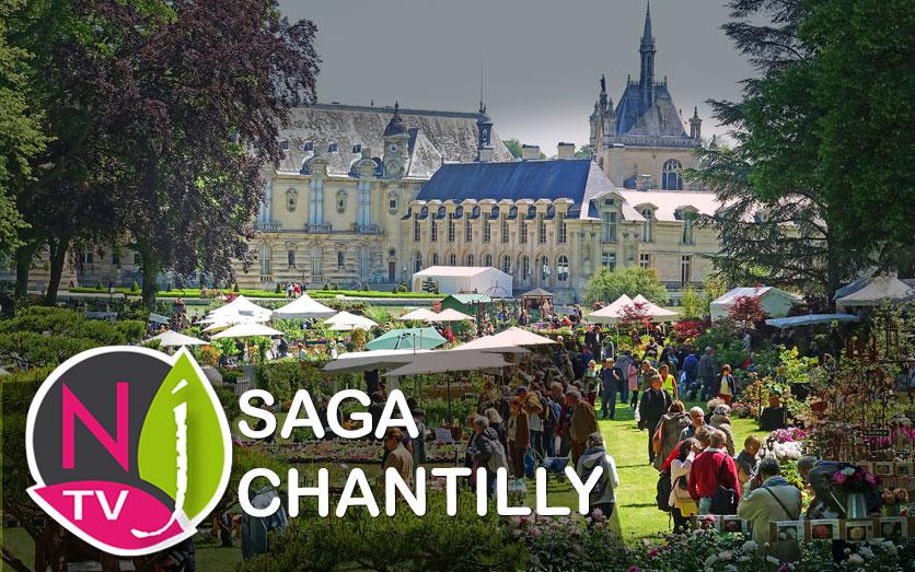 Saga Chantilly